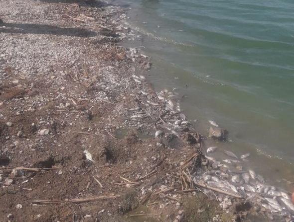 На Златоустівському водосховищі сталася задуха риби